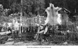 Man with dogs and animal skins drying, probably on the Olympic Peninsula