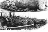 Loaded log trains, probably on the Olympic Peninsula