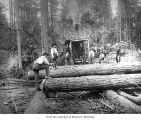Hall and Bishop Logging Company operations showing loggers with a donkey engine, probably on the...