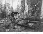 Hall and Bishop Logging Company operations showing loggers with a donkey engine, probably in or...