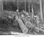 Hall and Bishop Logging Company operations showing loggers standing on logs, probably in or near...