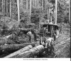 Hall and Bishop Logging Company operations showing loggers and horses at a loading site, probably...