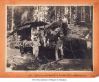 Hall and Bishop Logging Company operations showing loggers and horses with donkey engine, probably...
