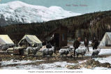 Klondikers with team of Angora goats used to haul sled near Skagway, Alaska, Spring 1898