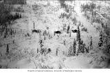 Bird's-eye view of three cabins in winter, probably Yukon Territory, ca. 1898