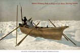 Eskimo in a umiak, or skin-covered boat, on ice floe with whale catch, Bering Straits, n.d.