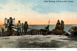 Eskimos with umiaks and walrus carcasses, Alaska, n.d.