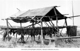 Drying salmon on fish racks along the Yukon River possibly near Fairbanks, n.d.