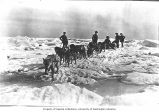 Sport Smith transporting the mail using a dogsled team from the steamer CORWIN over ice on the...