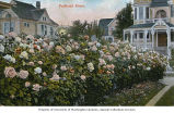 Rose garden with Victorian house in background, Portland, Oregon, ca. 1908