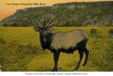 Elk bull with Table Rock in background, vicinity of Medford, Oregon, ca. 1911