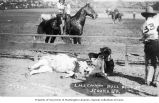 Cowboy L. H. Lewman wrestling a steer at the Round-Up, Pendleton, Oregon, ca. 1912