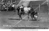 Cowboy Roy Hunter wrestling with a steer at the Round Up, Pendleton, Oregon, ca. 1912