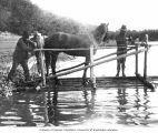 Transporting a horse, possibly across a river, on a raft, n.d.