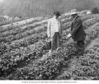 Professor Georgeson and Honorable Seth Mann standing in a field, Government Experimental Farm,...