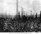 Snow-covered forest looking down Alsek River from near Dalton Post, Alaska Midland Railway survey,...