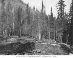 Cabin site on the White River, Yukon Territory, Alaska Midland Railway survey, 1909