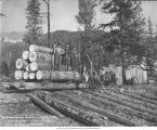 Crew with logs for construction of Alaska Central Railroad, Camp Johnston, September 17, 1905