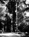 Frog/Raven totem pole (Haida) at Sitka National Historical Park, Alaska, ca. 1960s