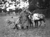 Woman in skin parka with two harnessed reindeer in grassy field near trees, Seward Peninsula,...
