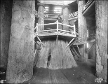 Men peering out from within a huge tree stump, Forestry  Building interior, Alaska-Yukon-Pacific...