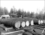 First logs for the Forestry Building construction, Alaska-Yukon-Pacific Exposition, Seattle,...