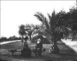 Older man with beard and woman seated on bench next to palm trees, unidentified location, ca. 1906
