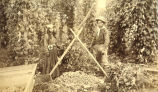 Two Puget Sound Indians, a man and a woman, standing in a hop field, unidentified farm,...