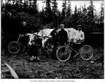 Young men with oxen and bicycles, probably on the Olympic Peninsula