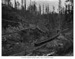 Logging railroad, probably on the Olympic Peninsula
