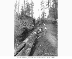 Bucking crew constructing skidway, Wynooche Timber Company, ca. 1921