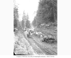Crew and horse grader teams constructing railroad right-of-way, Wynooche Timber Company,...
