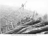 Loggers on pile of logs, Mumby Lumber and Shingle Company, possibly in Grays Harbor County, ca....
