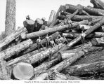 Loggers standing on large cold deck, Schafer Brothers Logging Company, probably in Grays Harbor...