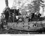 Loggers with donkey engine on skids, Schafer Brothers Logging Company, probably in Grays Harbor...