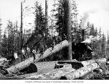 Crew at loading site with donkey engine and log rigged for loading, Schafer Brothers Logging...