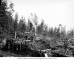 Construction crew with steam shovel and small railroad trestle under construction, camp 2, Schafer...