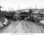 Loaded log trucks, Camp 10, Schafer Brothers Logging Company, Grays Harbor County, 1942