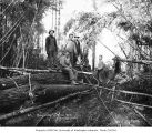 Loggers in the woods, Vance Lumber Company, near Malone, ca. 1916