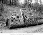 Bucking crew with large log, White Star Lumber Company, probably near Whites, n.d.