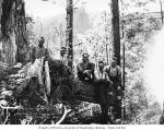 Loggers in the woods, Workman Creek Logging Company, probably near Elma, ca. 1926