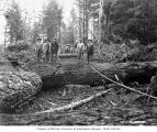 Loggers in the woods, Wynooche Timber Company, near Montesano, ca. 1921