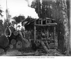 Loading crew, donkey engine, loaded skeleton car, and log tongs, camp 3, Simpson Logging Company,...