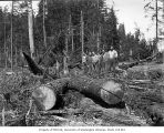 Loading crew with logs rigged for dragging, Donovan-Corkery Logging Company, ca. 1928