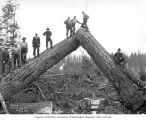 Loading crew on logs ready for loading, camp 4, Polson Logging Company, near Hoquiam, n.d.