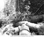 Loggers in the woods, camp 3, Polson Logging Company, near New London, n.d.