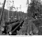 Loading crew on stacked logs at loading site, Goodyear Logging Company, near Clallam Bay, ca. 1920