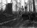 Crew posing with log being skidded out, Columbia River Timber Company, Goble, ca. 1918