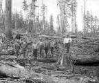 Men yarding in woods, Elwood and Snow Logging Company, Nehalem,  ca. 1917