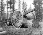 Caterpillar tractor yarding with yokes, Forest Lumber Company, Pine Ridge, ca. 1925